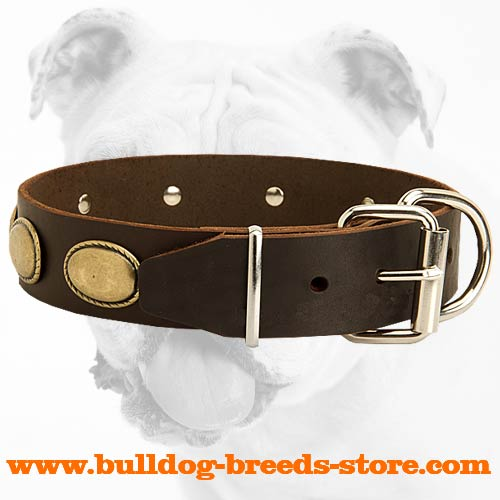 Genuine Leather Bulldog Collar with Reliable Hardware
