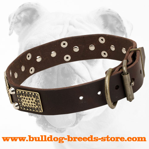 Wide Leather Bulldog Collar with Strong Hardware