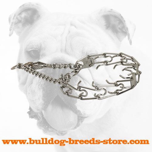 Training Chrome Plated Dog Pinch Collar for Bulldogs