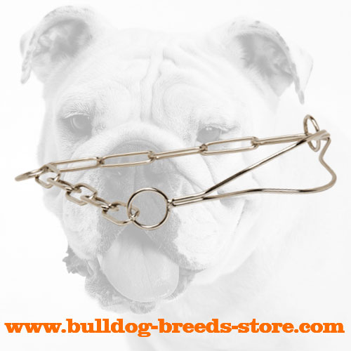 High Quality Chrome Plated Bulldog Show Collar