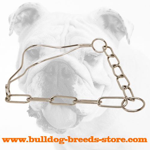 Chrome Plated Show Bulldog Collar with Fur Saving Links