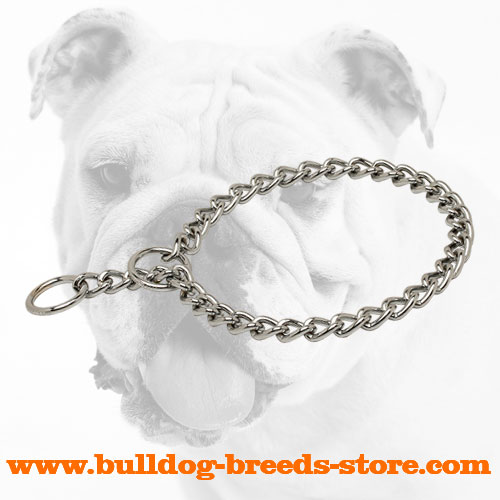 Plated with Chrome Bulldog Choke Chain Collar