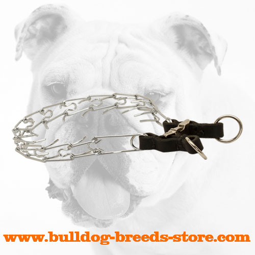 Chrome Plated Steel Bulldog Pinch Collar for Training