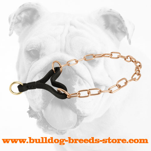 Rust Resistant Curogan Martingale Bulldog Collar for Walking