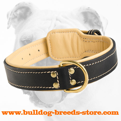 Soft Walking Leather Bulldog Collar with Fur Protection Plate and D-ring