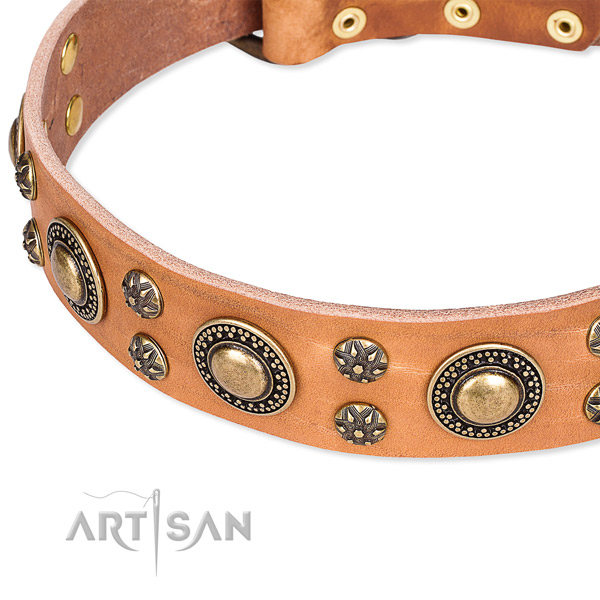 Leather dog collar with amazing studs