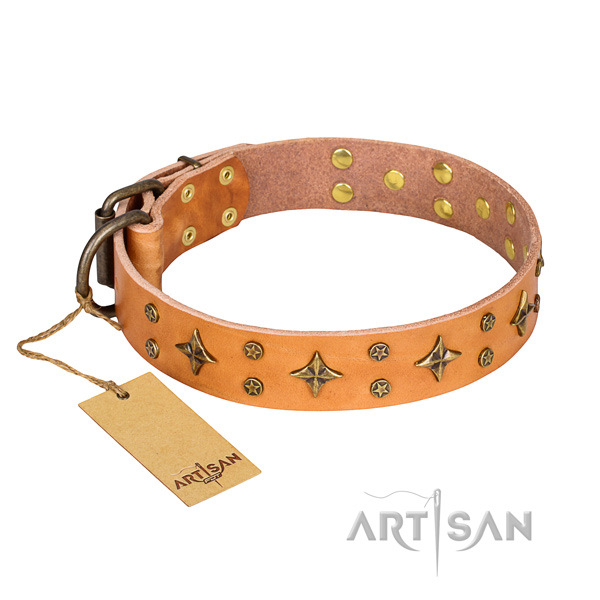 Significant full grain leather dog collar for stylish walking