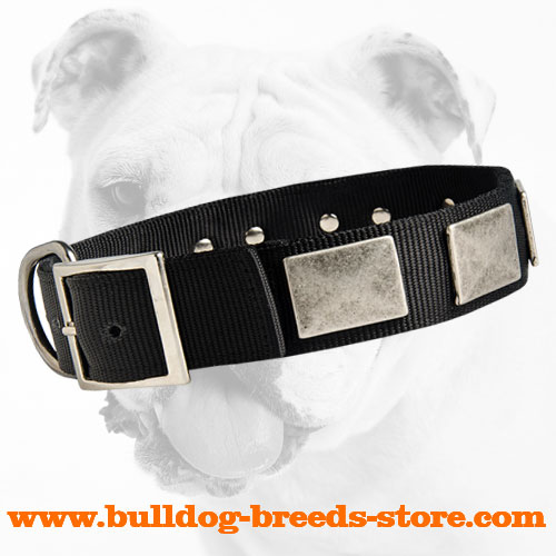 Walking Nylon Bulldog Collar with Strong Fittings