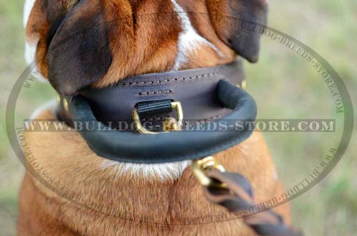 Thick Handle on Training Leather Bulldog Collar