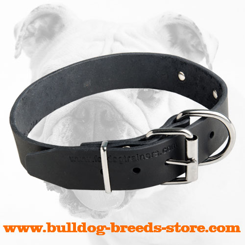 Reliable Leather Bulldog Collar Strong Nickel Hardware