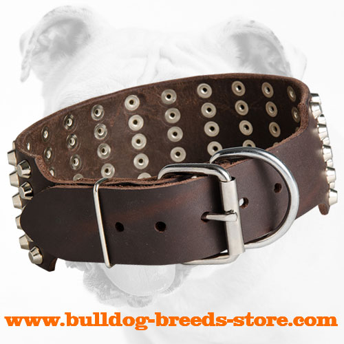 Wide Leather Bulldog Collar with Studs and Strong Buckle