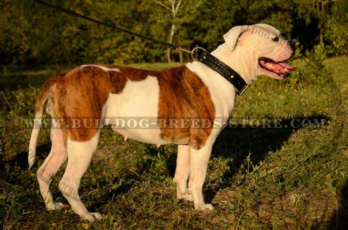 Handcrafted Braided Leather Bulldog Collar for Walking