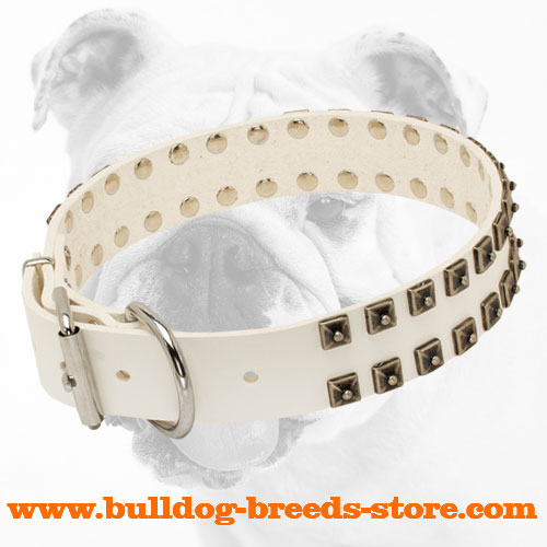 Training Fashion White Leather Bulldog Collar with Strong Buckle