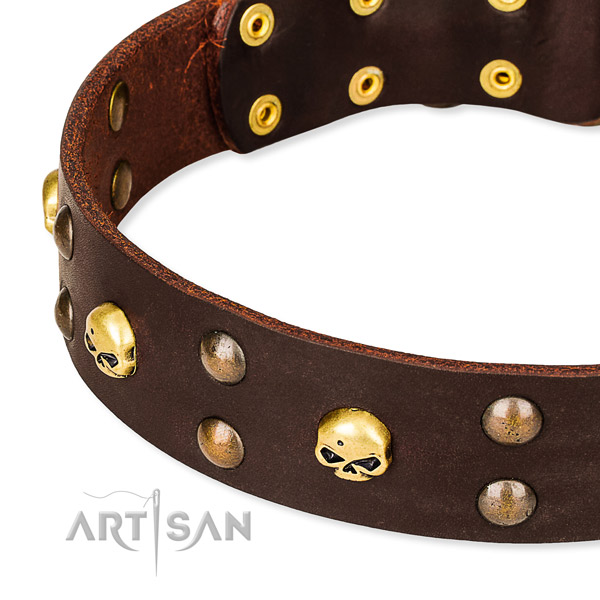 Top notch leather dog collar for stylish walking