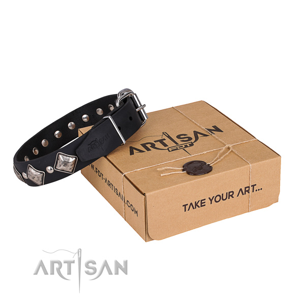 Casual style leather dog collar with exciting studs