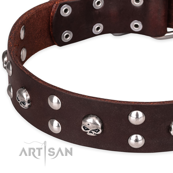 Daily leather dog collar with refined studs