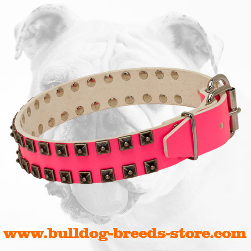 Fashionable Leather Bulldog Collar with Nickel Hardware