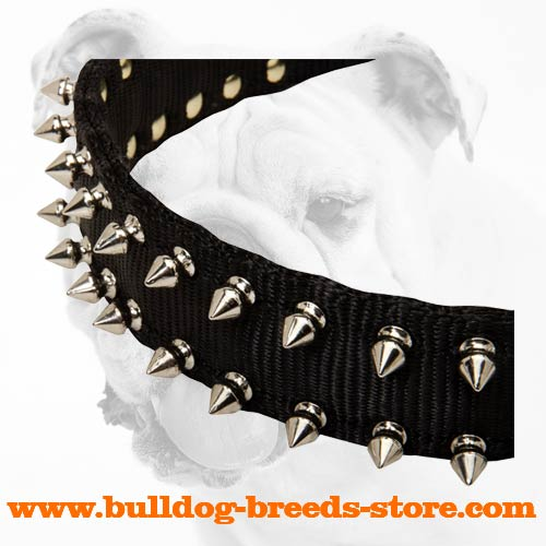 Nickel Spikes on Strong Walking Nylon Dog Collar for Bulldog
