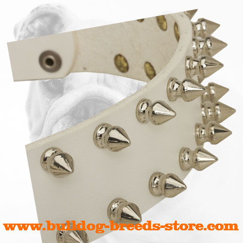 Nickel Spikes on Walking White Leather Bulldog Collar