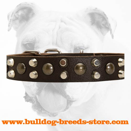 Studs and Pyramids on Fashion Leather Bulldog Collar for Handling