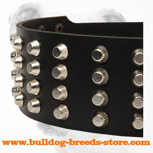 Studs on Adjustable Walking Leather Bulldog Collar