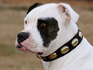 Gorgeous Vintage Dog Leather Collar for Valley Bulld- C103