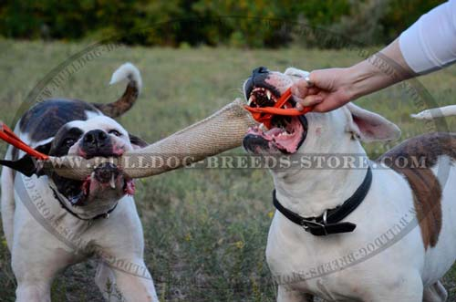 Properly Stuffed Jute American Bulldog Tug