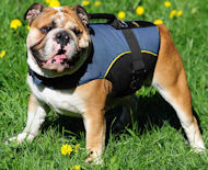 British BULLDOG Vest dog Harness-Dog Harness with handle