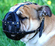 Durable Leather English Bulldog Muzzle