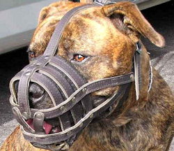 leather-dog-muzzle-for-pitbull