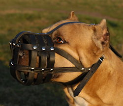 leather-wire-dog-muzzle-pitbull