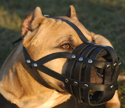 pitbull-leather-muzzle