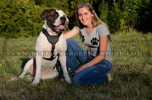 Reliable Spiked Leather Dog Harness for American Bulldogs