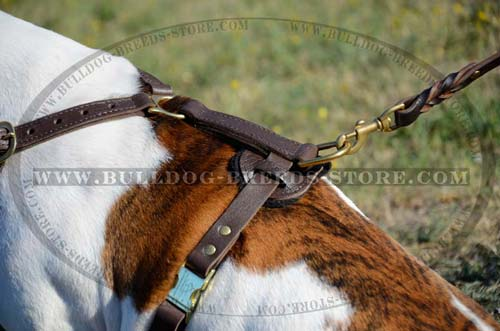 Padded Back Plate of Leather Bulldog Harness with Quick Release Buckle
