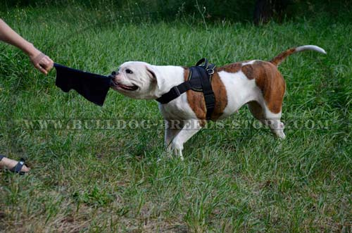 Lightweight Nylon American Bulldog Harness