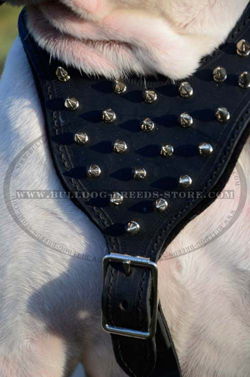 Spikes on Leather Harness with Comfortable Chest Plate
