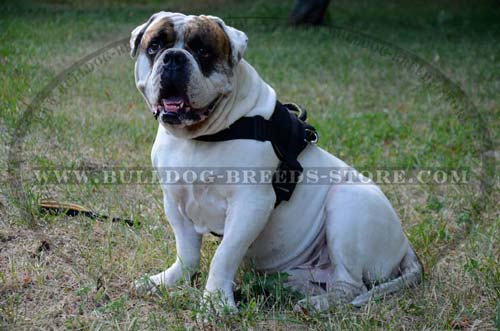 Lightweight Nylon American Bulldog Harness for Better Control
