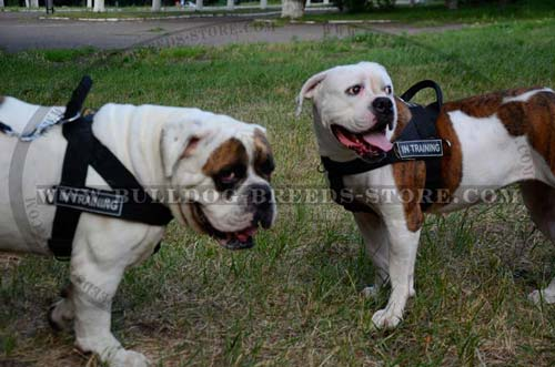 Lightweight Nylon American Bulldog Harness for Sport Activities