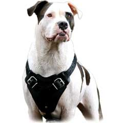 Leather Bulldog Harness for Regular Training