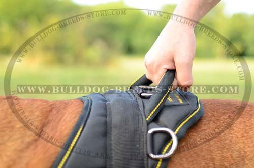 Handle on Training Nylon Bulldog Harness