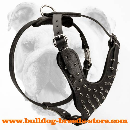 Walking Leather Bulldog Harness with Spikes