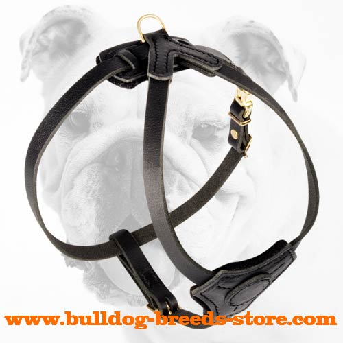 Lightweight Leather Bulldog Puppy Harness