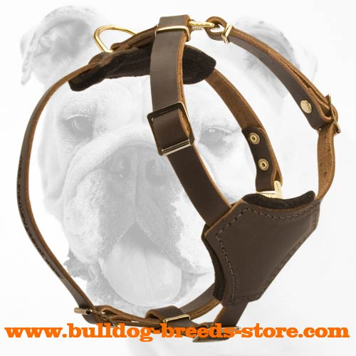 Genuine Leather Bulldog Puppy Harness