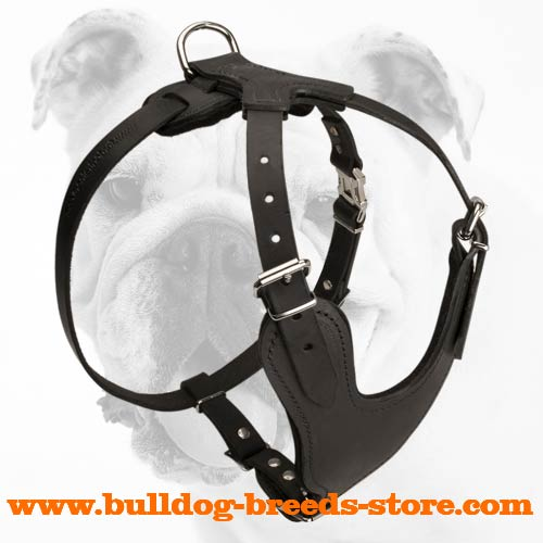 Reliable Training Leather Bulldog Harness