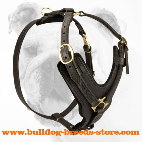 Regular Training Leather Bulldog Harness with Wide Straps