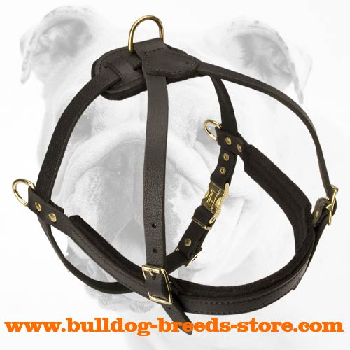 Soft Training Leather Bulldog Harness