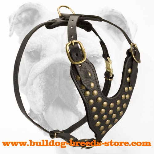 Safe Adjustable Studded Leather Bulldog Harness
