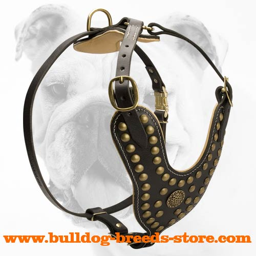 Safe and Durable Brass Studded Training Leather Bulldog Harness