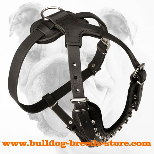 Comfortable Training Leather Bulldog Harness with Studs