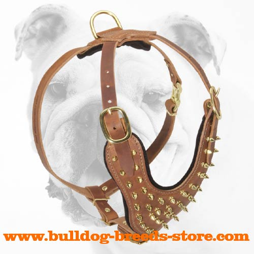 Walking Spiked Leather Bulldog Harness with a Soft Padded Chest Area